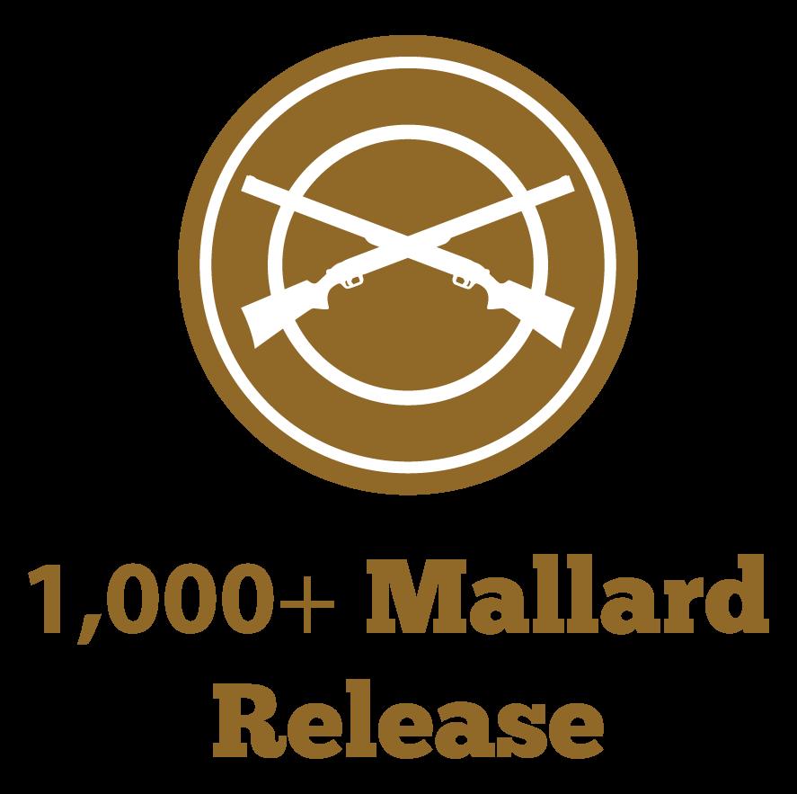 M&M 1000+ Mallard Release icon